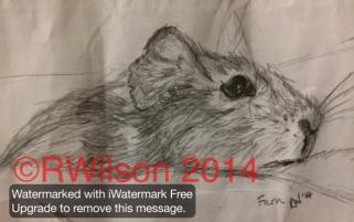Fern (encil sketch on the back of an envelope!)