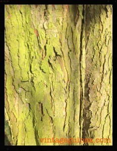 Do you remember doing tree bark rubbings with sugar paper and brightly coloured crayons?