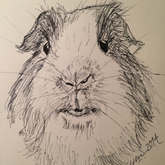 Guinea Pig (pen and ink on paper)